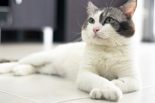 Chronic Renal Disease Crd In Cats The Cat Hospital Of Media