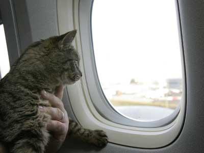 cat-plane